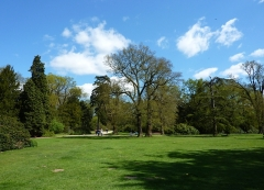 Old Trees, Clumber Park, Sherwood Forest