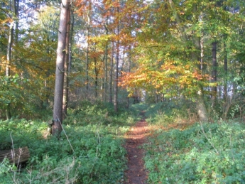 Sherwood Forest woodland path Kings Clipstone